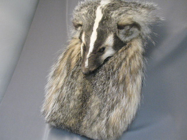 Badger Full Mask Sporran